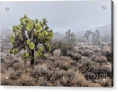 Out Of The Mist Acrylic Print