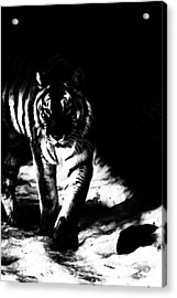 Out Of The Shadows Acrylic Print by Karol Livote