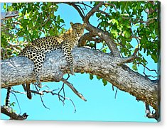 Out On A Limb Acrylic Print