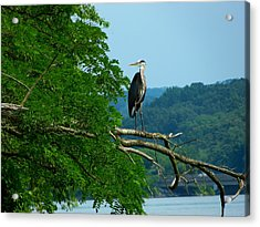 Acrylic Print featuring the photograph Out On A Limb by Donald C Morgan