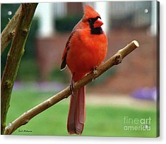 Acrylic Print featuring the photograph Out On A Limb by Sue Melvin