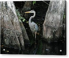 Out Standing In The Swamp Acrylic Print by Lamarre Labadie