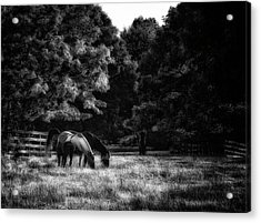 Out To Pasture Bw Acrylic Print by Mark Fuller