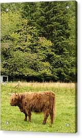 Acrylic Print featuring the photograph Out To Pasture by Christi Kraft