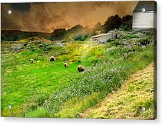 Out To Pasture Acrylic Print by Diana Angstadt