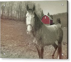 Out To Pasture Acrylic Print by JAMART Photography