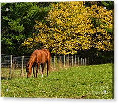 Out To Pasture Acrylic Print by Kathy Jennings
