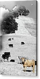 Out West Acrylic Print by Monroe Snook