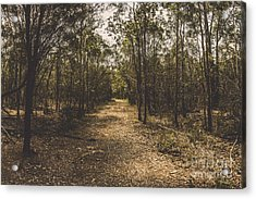 Outback Queensland Bush Walking Track Acrylic Print by Jorgo Photography - Wall Art Gallery