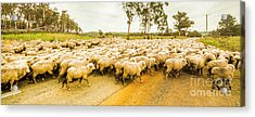 Outback Road Crossing Acrylic Print