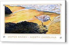 Outer Banks Sanderling Acrylic Print