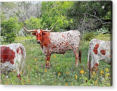 Outflanked Acrylic Print