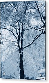 Outside My Window Acrylic Print by Linda Sannuti