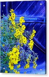 Outstanding Acrylic Print by Frank Wickham