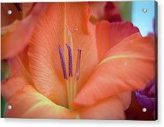 Ovation In Orange 4 Acrylic Print
