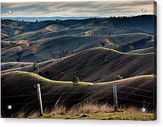 Over The Back Fence Acrylic Print
