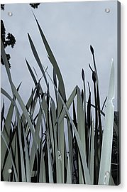 Over There Acrylic Print