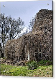 Acrylic Print featuring the photograph Overgrown by Alan Raasch