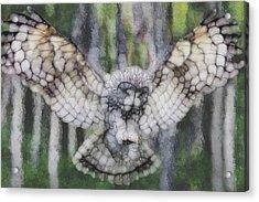 Owl 3 Acrylic Print by Jack Zulli