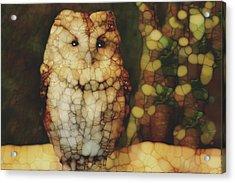 Owl 5 Acrylic Print by Jack Zulli