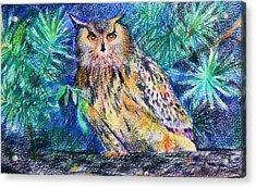 owl Acrylic Print by Anastasia Michaels