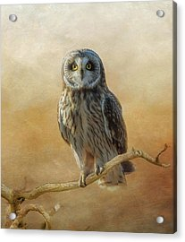 Acrylic Print featuring the photograph Owl  by Angie Vogel