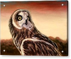 Owl At Sunset Acrylic Print