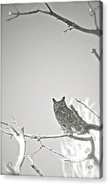 Owl Be Seeing You Acrylic Print