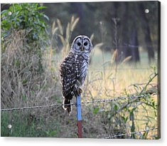 Owl Cherish This Moment Forever Acrylic Print by Roxanne Raber