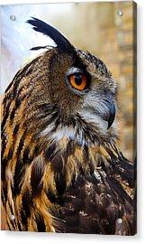 Owl-cry Acrylic Print