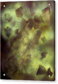 Owl Eyes Acrylic Print by Lynda McDonald