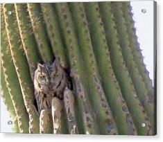 Owl In Cactus Burrow Acrylic Print