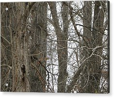 Owl In Camouflage Acrylic Print
