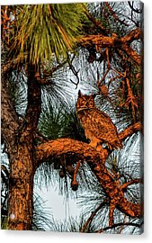 Owl In The Very Last Sunset Light Acrylic Print