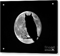 Owl Moon Acrylic Print by Al Powell Photography USA