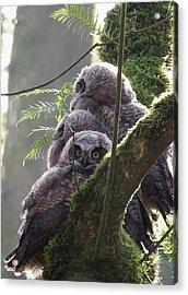 Owl Morning Acrylic Print
