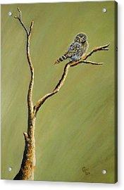 Owl On A Branch Acrylic Print