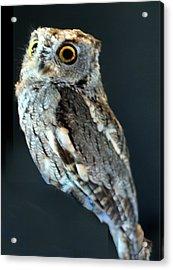 Owl On Black Acrylic Print by Michael Riley