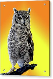 Owl On Branch Acrylic Print by Michael Riley