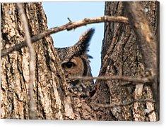 Owl Peek Acrylic Print