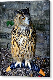 Nature Acrylic Print featuring the photograph Owl by Roberto Alamino
