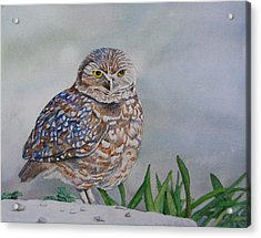 Owl Acrylic Print by Sharon Farber