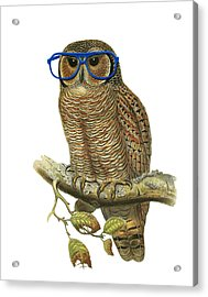 Owl Sitting On A Branch With Blue Glasses Acrylic Print