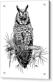 owl Acrylic Print by Stephen Taylor