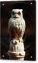 Owl Acrylic Print by Terry Cork