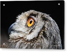 Owl The Grand-duc Acrylic Print by Mary-Lee Sanders