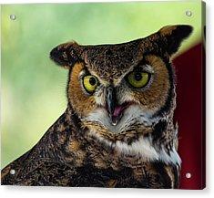 Owl Tongue Acrylic Print