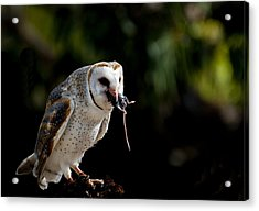 Owl Versus Mouse Acrylic Print