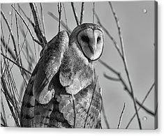 Owl Whites Acrylic Print