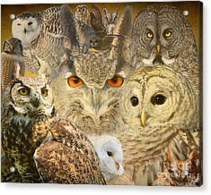 Owl You Need Is Love Acrylic Print by Heather King